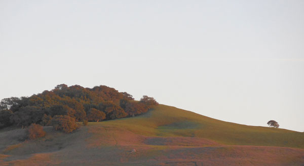 Petaluma ridge view