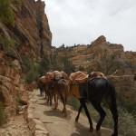 116-burros-ascending-6May2014-DSCN0209