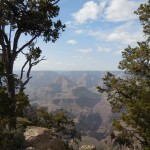 123-trees-canyon-view-6May2014-DSCN0258