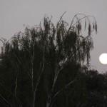 Petaluma moonrise